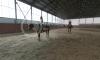 Катание на лошадях в комплексе Дачный манеж
